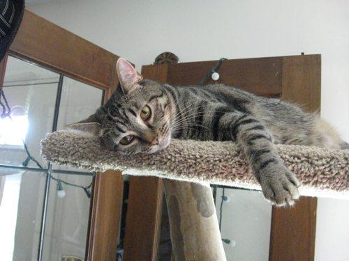 Cat-DRDanyaLinehan-AudreyAug32011059