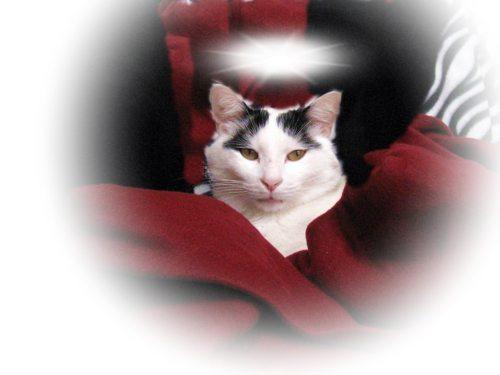 Cat-DRDanyaLinehan-Buca angelDec262010089Edit