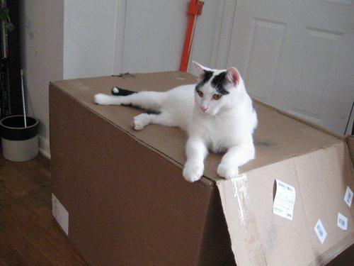 Cat-DRDanyaLinehan-Dec262010092