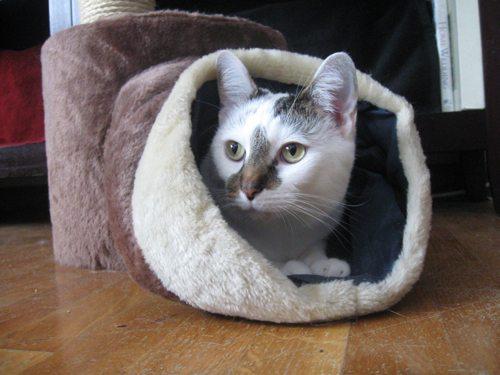 Cat-DRDanyaLinehan-Feb 242013011