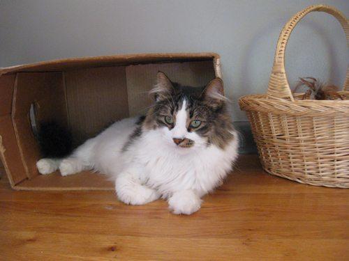 Cat-DRDanyaLinehan-InstuffSeptember162011051