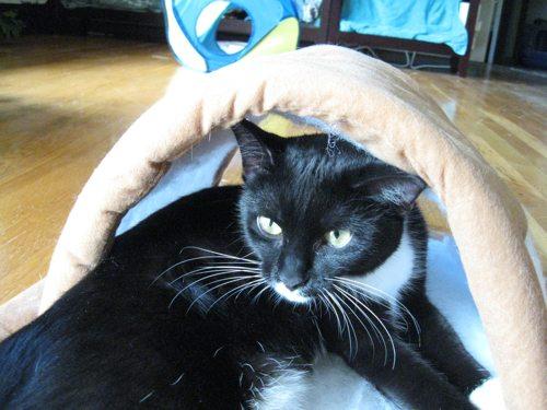 Cat-DRDanyaLinehan-InstuffSeptember162011085