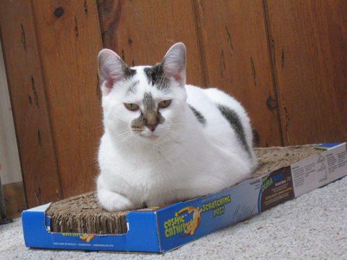Cat-DRDanyaLinehan-July102011 063