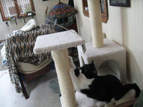 Cat-DRDanyaLinehan-July172011010