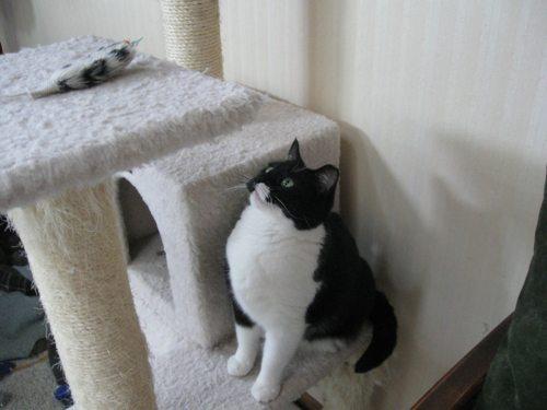 Cat-DRDanyaLinehan-July172011013