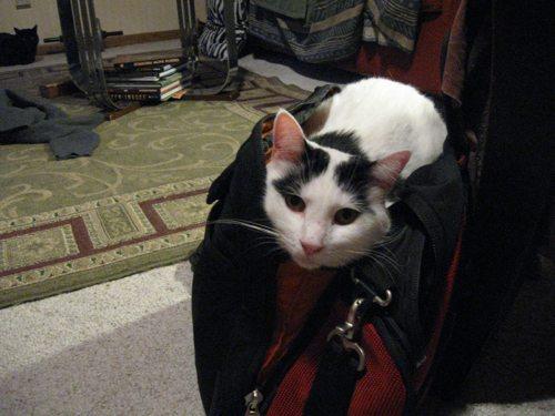 Cat-DRDanyaLinehan-Sept42010113