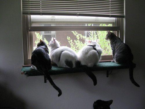 Cat-DRDanyaLinehan-TogetherMay222011010