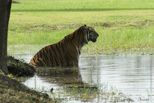 Big-Cat-Rescue-Tigers_1224039531_n