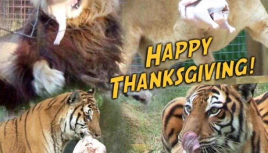 Happy Thanksgiving 2013