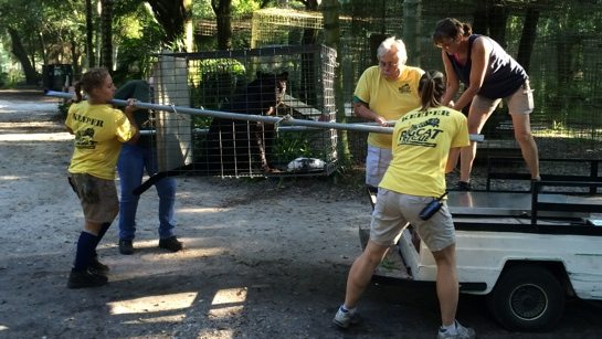 Volunteers-Move-Jumanji-Leopard-03