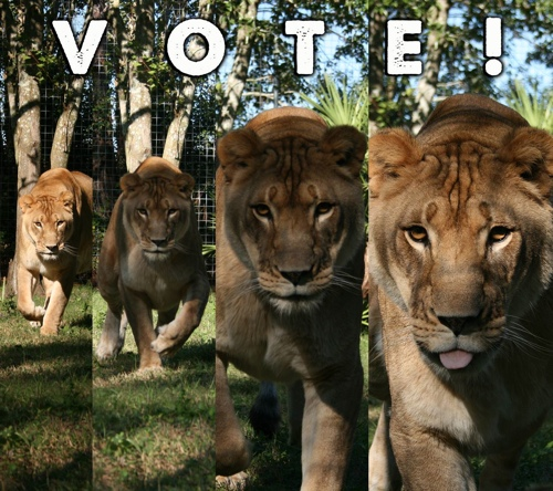 WEDU Vote BCR Nikita Lion