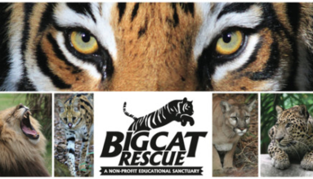 Logo Big Cat Rescue and Cats