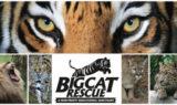 Logo Big Cat Rescue and Cats