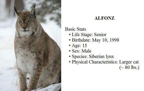 Lynx-Shayla-Scott-Alfie-Profile