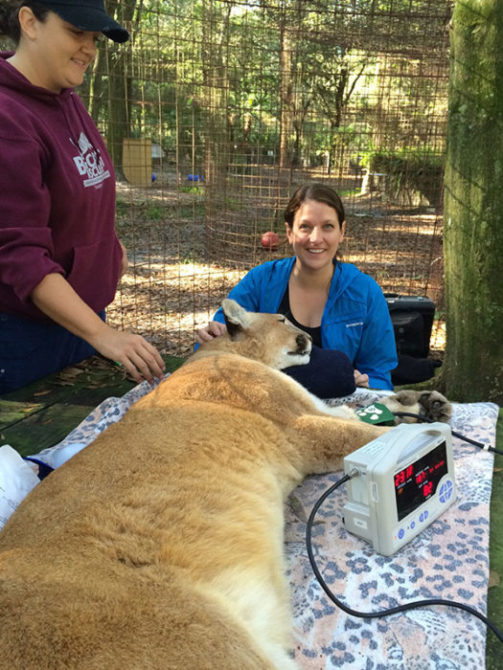 Dr. Tammy Miller and Dr. Liz Wynn check out Narla Cougar
