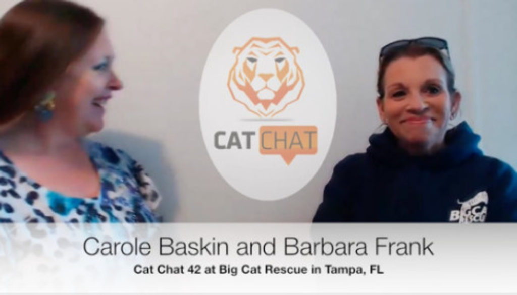 Cat Chat 42 Barbara Frank