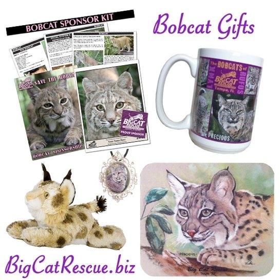 Bobcat Gifts