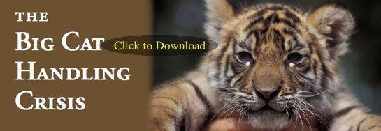 Download Cub Handling Fact Sheet