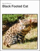 "FREE BOOK to learn about the tiny wild cat species ""Black Footed Cat"""