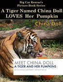 FREE PICTURE BOOK with photos of tigers with pumpkins