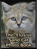 "Free Book about the elusive little wild sand cat species and a lot of sand cat photos ""The Elusive Sand Cat"""