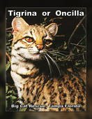 FREE BOOK to learn about the wild cat species called TigrinaOrOncilla