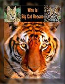 "FREE BOOK ""Who Is Big Cat Rescue"" to learn about an accredited sanctuary in Tampa, FL"