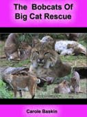 "Free Book ""Bobcats of Big Cat Rescue"""