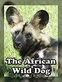 FREE BOOK to learn about the African Wild Dog there are a LOT of photographs