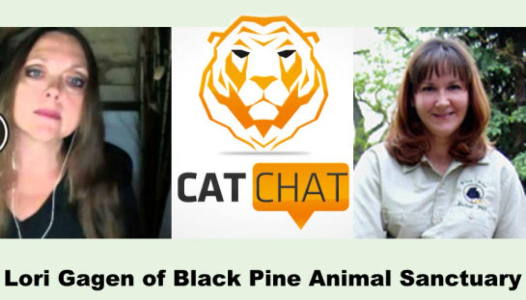 Cat Chat 52 Lori Gagen