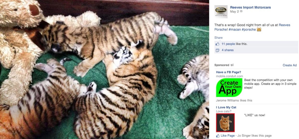 Big Cat Rescue gives a huge SHOUT OUT to Porsche!