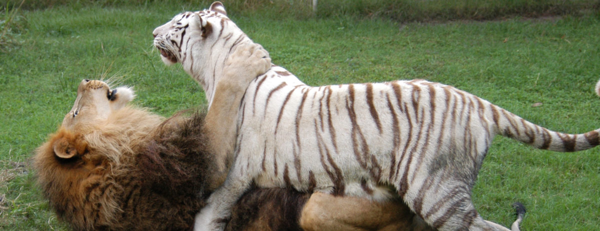 Big Cat Rescue Wants to be the Only Big Cat Sanctuary