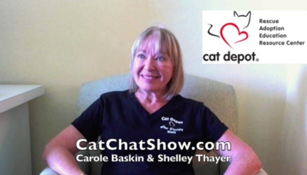 Cat Chat Show Cat Depot