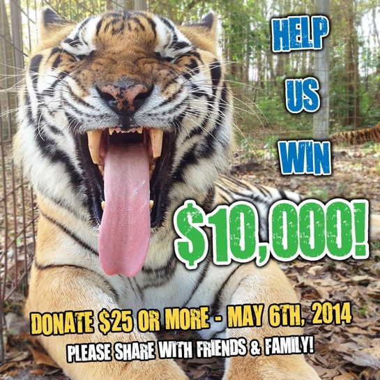 Give Day Big Cat Rescue