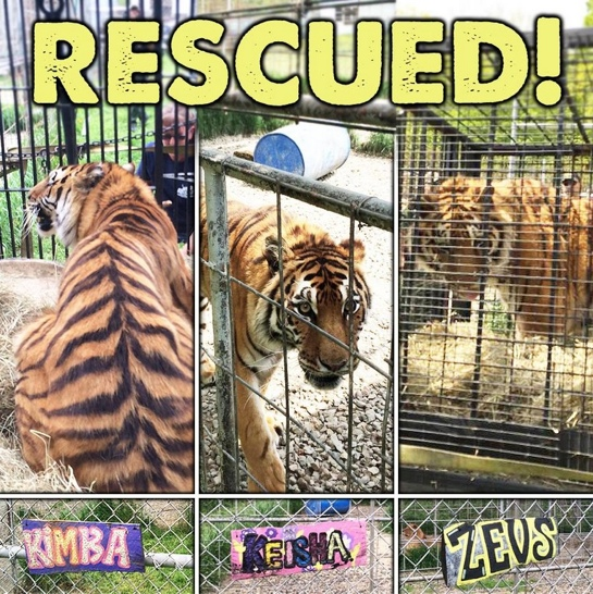 Jnk Tiger Rescue