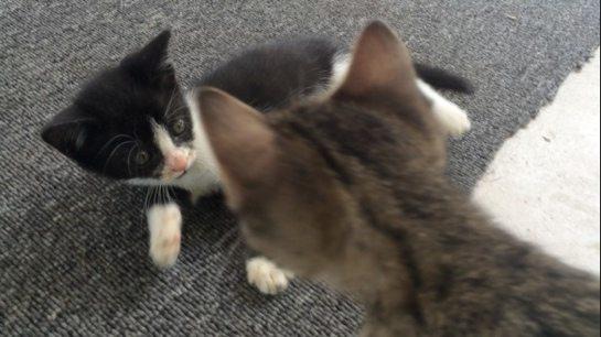 KittensPlayingOnPorch