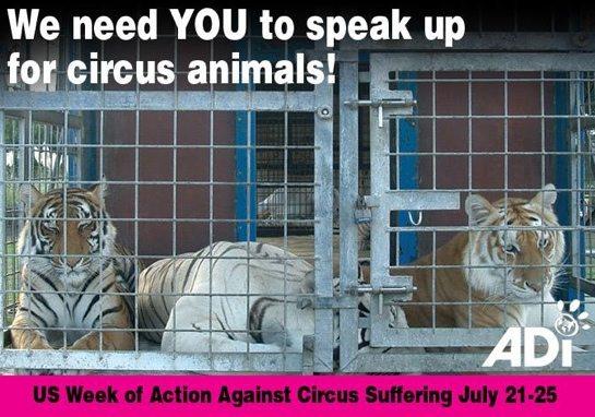 adi circus ban