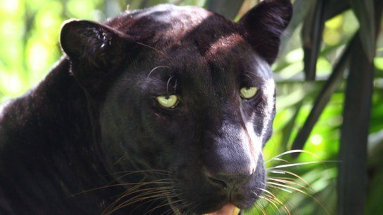 Now at Big Cat Rescue Aug 21 2014