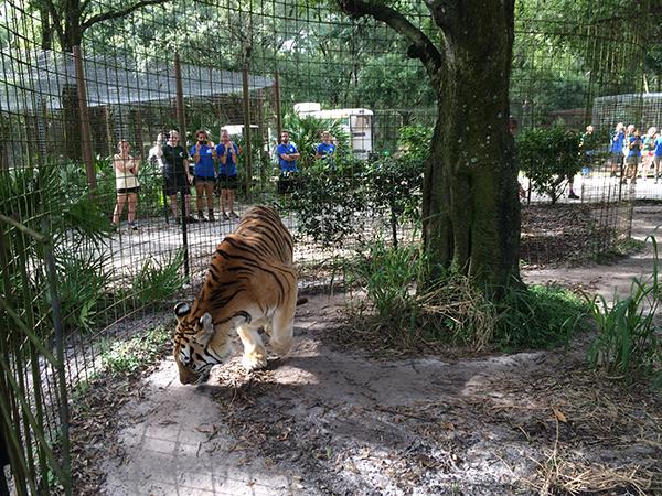 Kali-Tiger-Arrival-06
