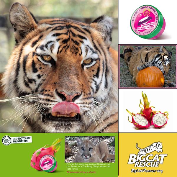 Body Shop Dragon Fruit Lip Butter