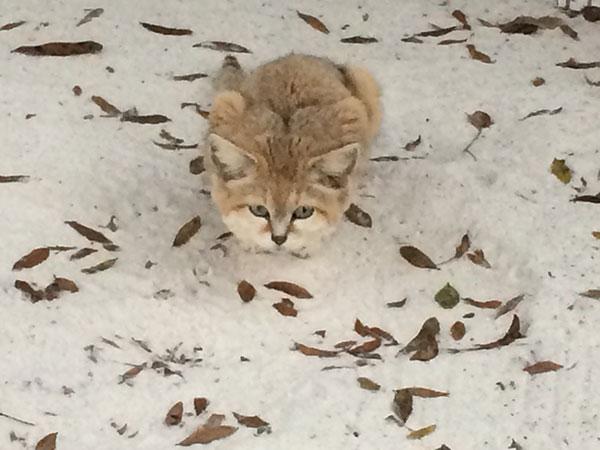 Genie-Sandcat