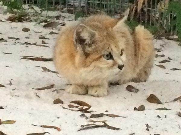 Genie-Sandcat-2014-10-14-16.58.41