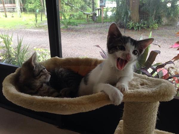 Kittens-Alyssa-Webber-2014-09-07 15.50.04