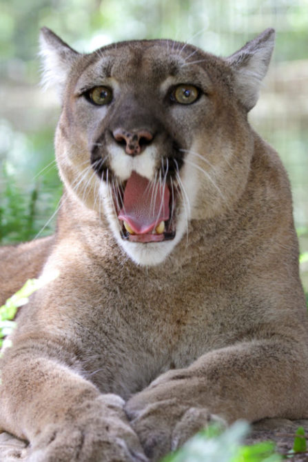 Now at Big Cat Rescue Oct 14 2014