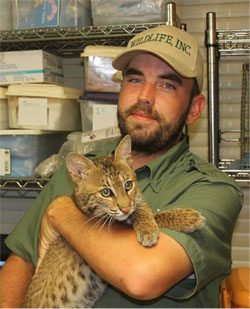 Rescued bobcat at WE&RC who has seizures will be subjected to loud tram noise