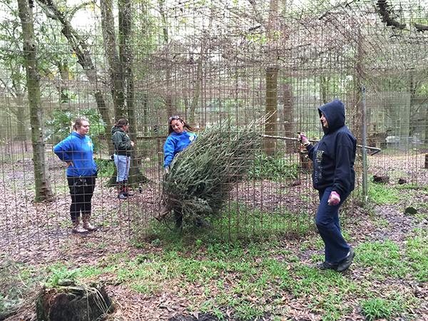 Volunteers-Christmas-Tree-Enrichment_2831