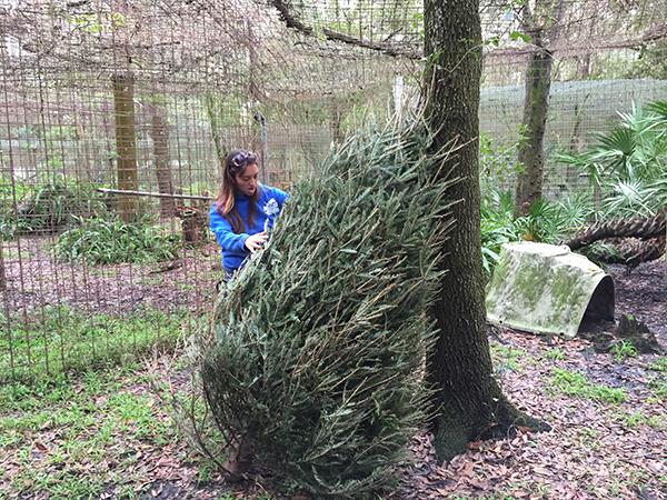 Volunteers-Christmas-Tree-Enrichment_2832
