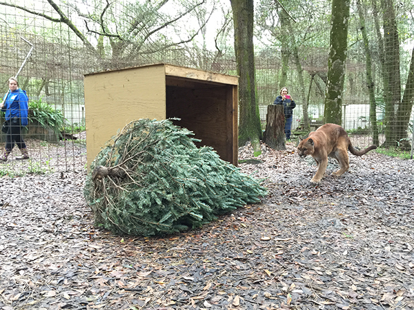 Volunteers-Christmas-Tree-Enrichment_2836