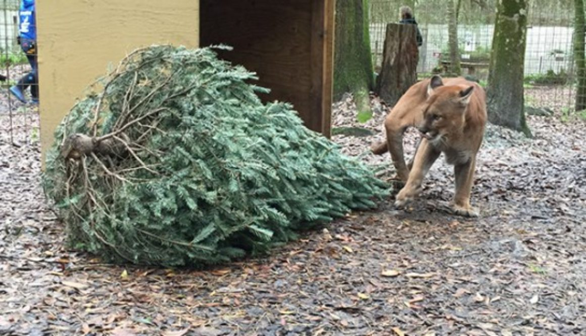 Volunteers-Christmas-Tree-Enrichment_2838