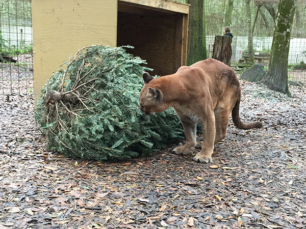 Volunteers-Christmas-Tree-Enrichment_2842